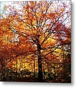 Eye Of The Forest Metal Print