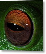Eye Of The Frog Metal Print