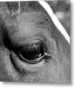 Eye Of The Horse Black And White Metal Print