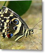Eye To Eye With A Butterfly Metal Print