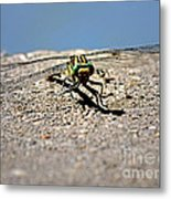 Eye To Eye With A Dragonfly Metal Print
