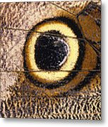 Eyespot On Wing Of Butterfly, Eriphanis Polyxena Metal Print