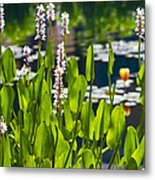 Fabulous Water Hyacinth  Metal Print