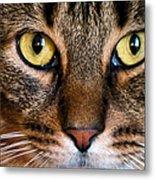 Face Framed Feline Metal Print by Art Dingo