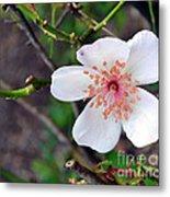 Fairy Crystal Rose-vi Metal Print