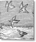 Falconry, 14th Century Metal Print