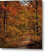 Fall At Center Point Trailhead Metal Print