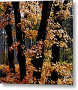 Fall Beckons  Metal Print