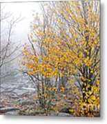 Fall Color And Fog Metal Print