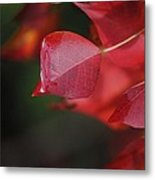Fall Color Red Metal Print