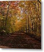Fall Color Road Metal Print