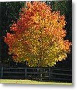 Fall Colored Tree Metal Print