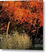 Fall Colors 2 Metal Print
