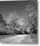 Fall Colors In Black And White Metal Print