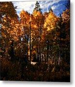 Fall Colors Taylor Creek. Metal Print