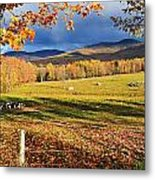Fall Colours, Cows In Field And Mont Metal Print