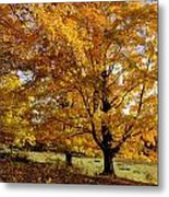 Fall Colours In Eastern Townships Metal Print