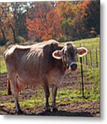 Fall Cow Metal Print