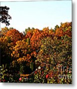 Fall Foliage And Roses Metal Print