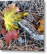 Fall Forest Floor Metal Print