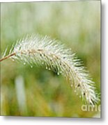 Fall Foxtail Metal Print