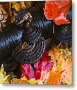 Fall Fungi Metal Print
