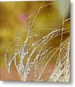 Fall Grass Metal Print