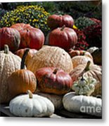 Fall Harvest Colorful Gourds 7965 Metal Print