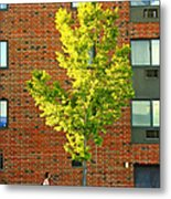 Fall In Rochester Metal Print