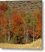 Fall In Snake River Canyon Metal Print