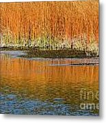 Fall In Yellowstone National Park Metal Print