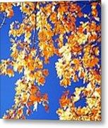 Fall Is In The Air Metal Print