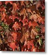 Fall Ivy On An Old Wall Metal Print