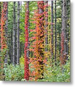 Fall Ivy On The Trees Metal Print
