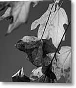 Fall Leaf Light Metal Print