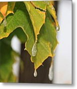 Fall Leaves And Icicles Metal Print by Cynthia  Cox Cottam