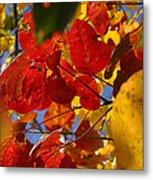 Fall Leaves Flp Metal Print