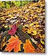 Fall Leaves In Forest Metal Print by Elena Elisseeva