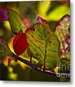 Fall Leaves Metal Print