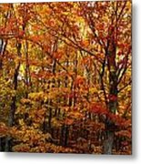 Fall Leaves On Trees Metal Print