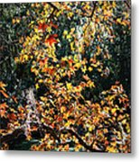 Fall Leaves Over Florida Pond Metal Print