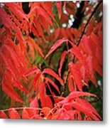 Fall Leaves Red 5 Metal Print