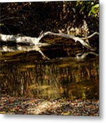 Fall Log Reflection Metal Print