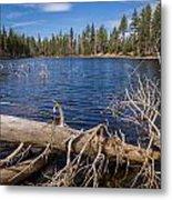 Fall Logs On Reflection Lake Metal Print