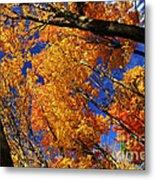 Fall Maple Treetops Metal Print by Elena Elisseeva