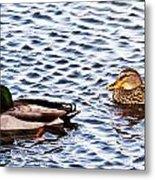 Fall Millards Swiming Metal Print