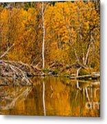 Fall On Taylor Creek Metal Print