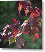 Fall Red Metal Print
