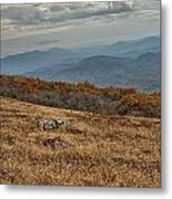 Fall Scene On Whitetop Mountain Va Metal Print