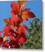 Fall Snowball Branch Metal Print